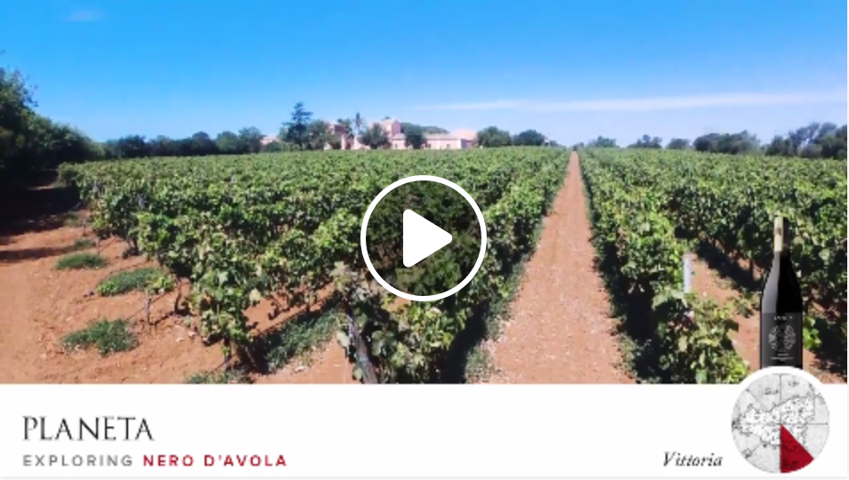 We fly on the vineyards of Nero d'Avola, in Vittoria