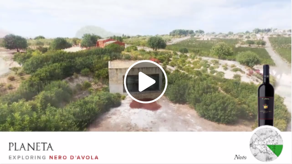 We fly on the vineyards of Nero D 'Avola in Noto