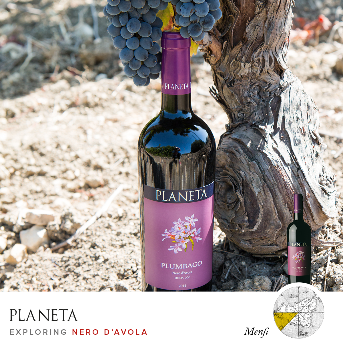 From Menfi, the Nero d'Avola for the Plumbago